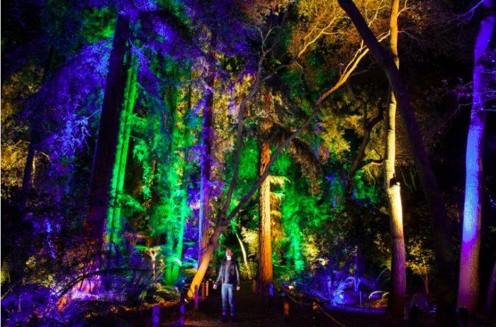 Enchanted Forest LA