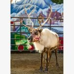 reindeer romp los angeles